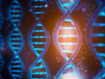 biotech dnk